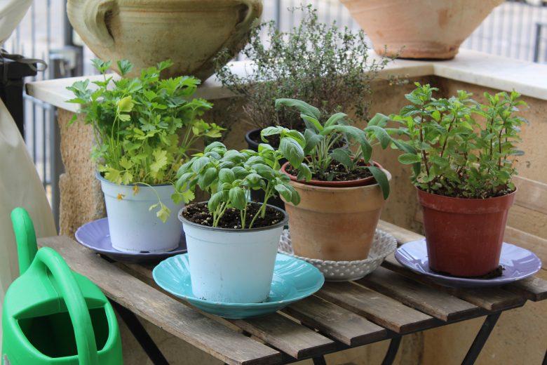 Coltivare le erbe  aromatiche anche all'interno della casa